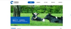 甘肃牛羊信息网